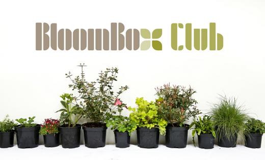 BloomBox Club logo