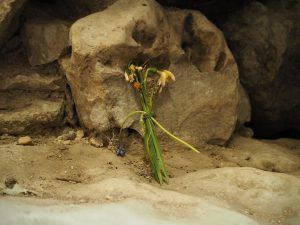 flowers left at West Kennet Long Barrow