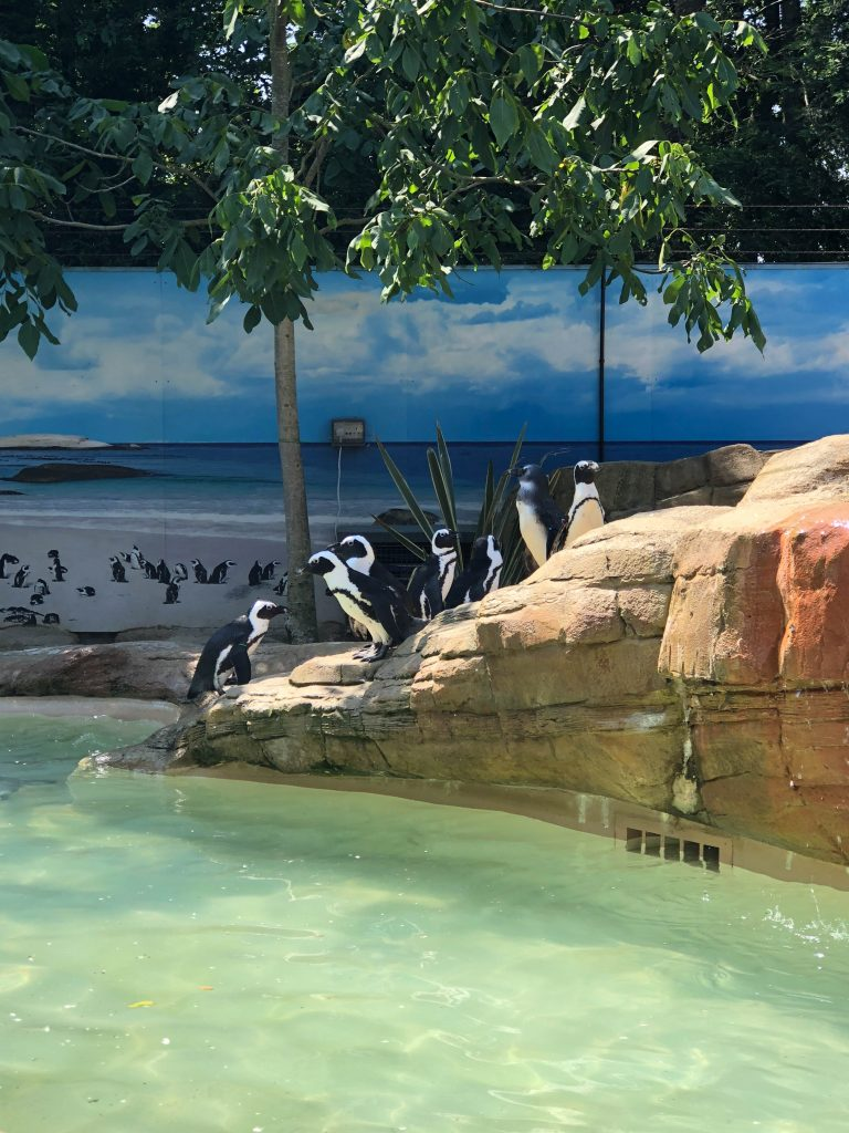 penguins at Paradise Wildlife Park