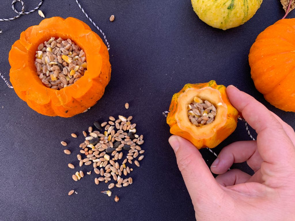 how to re-use pumpkins