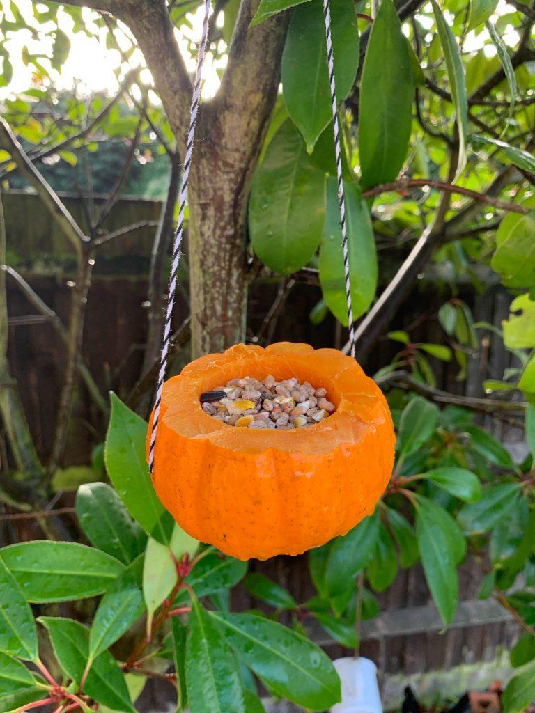 pumpkin bird feeders