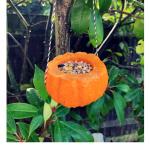 Turn your pumpkin into a bird feeder