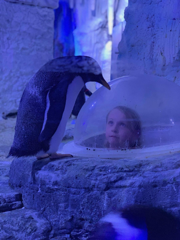 Juno the Penguin at London Aquarium