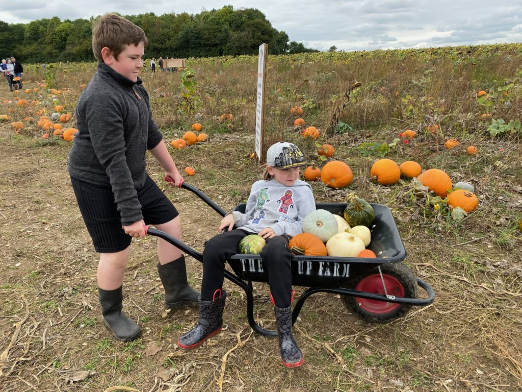 pick your own pumpkins at The Pop Up Farm