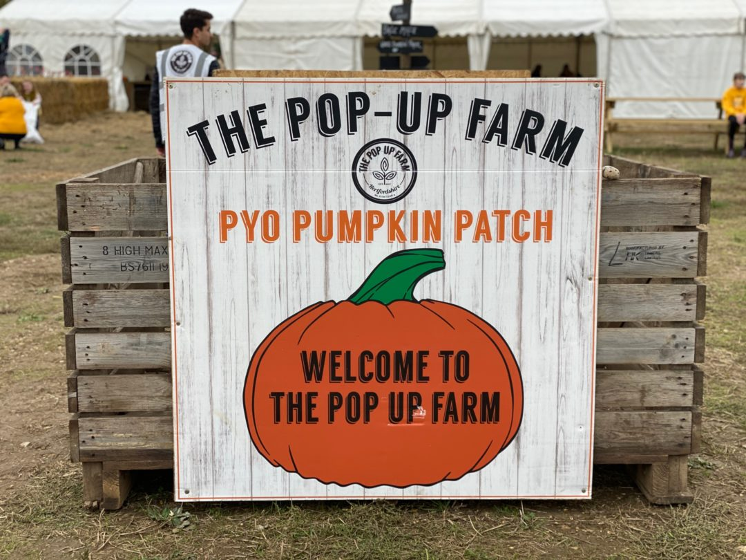The Pop Up Farm PYO pumpkin patch