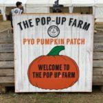A wheelbarrow full of pumpkins from The Pop Up Farm