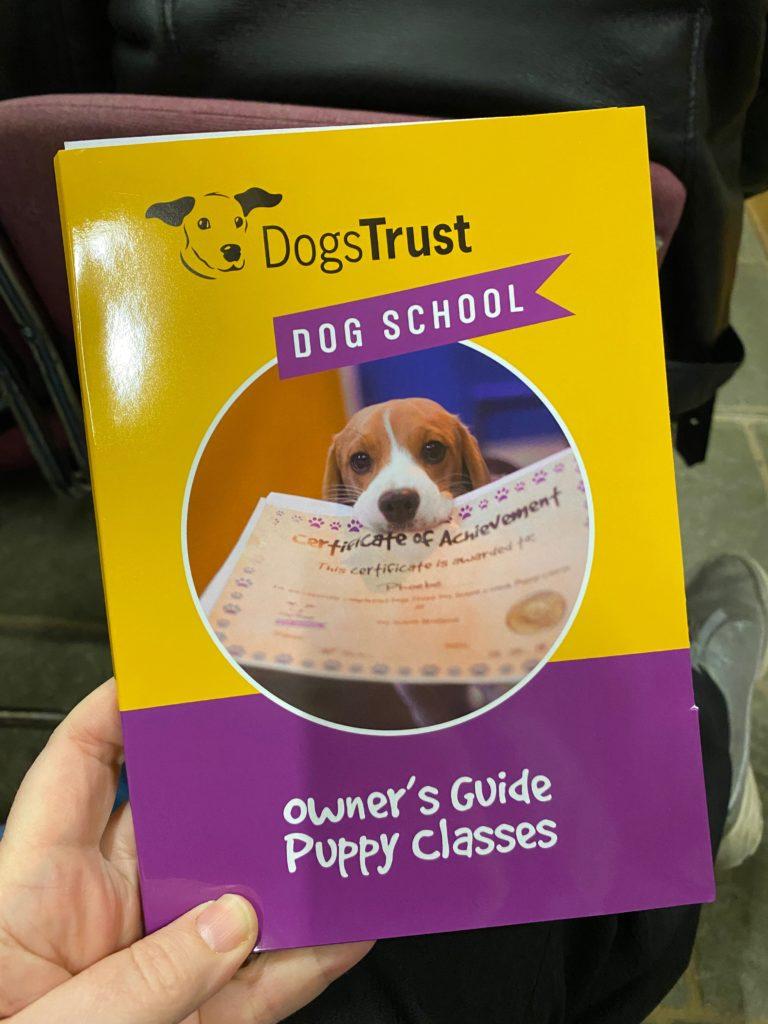 Dog School at the Dog's Trust