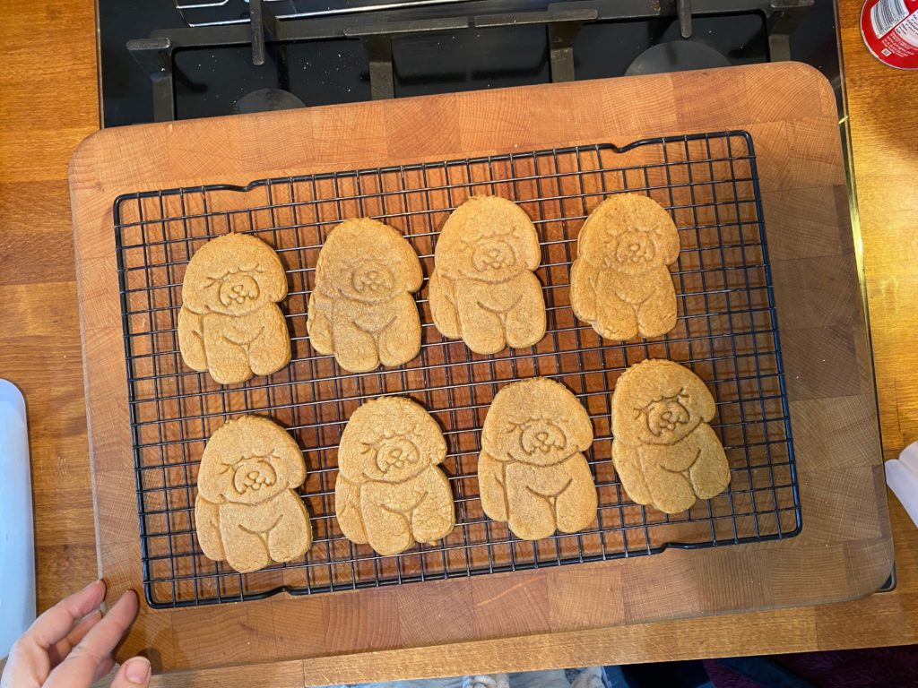 Bichon Frise biscuit