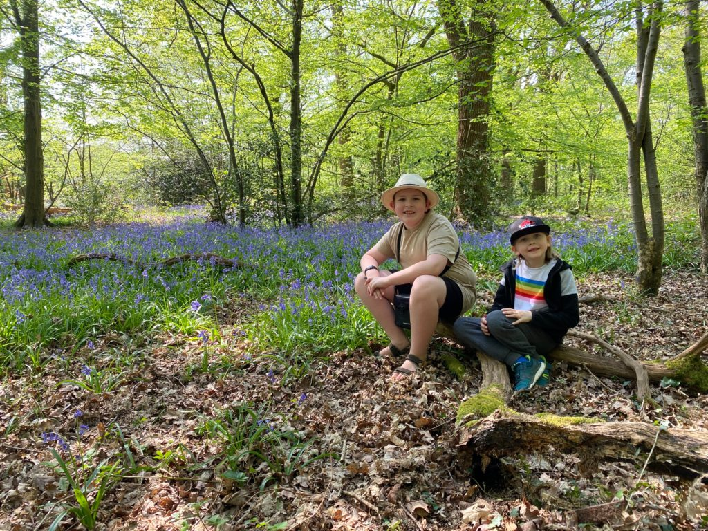 The best place to see bluebells in Ruislip, West London