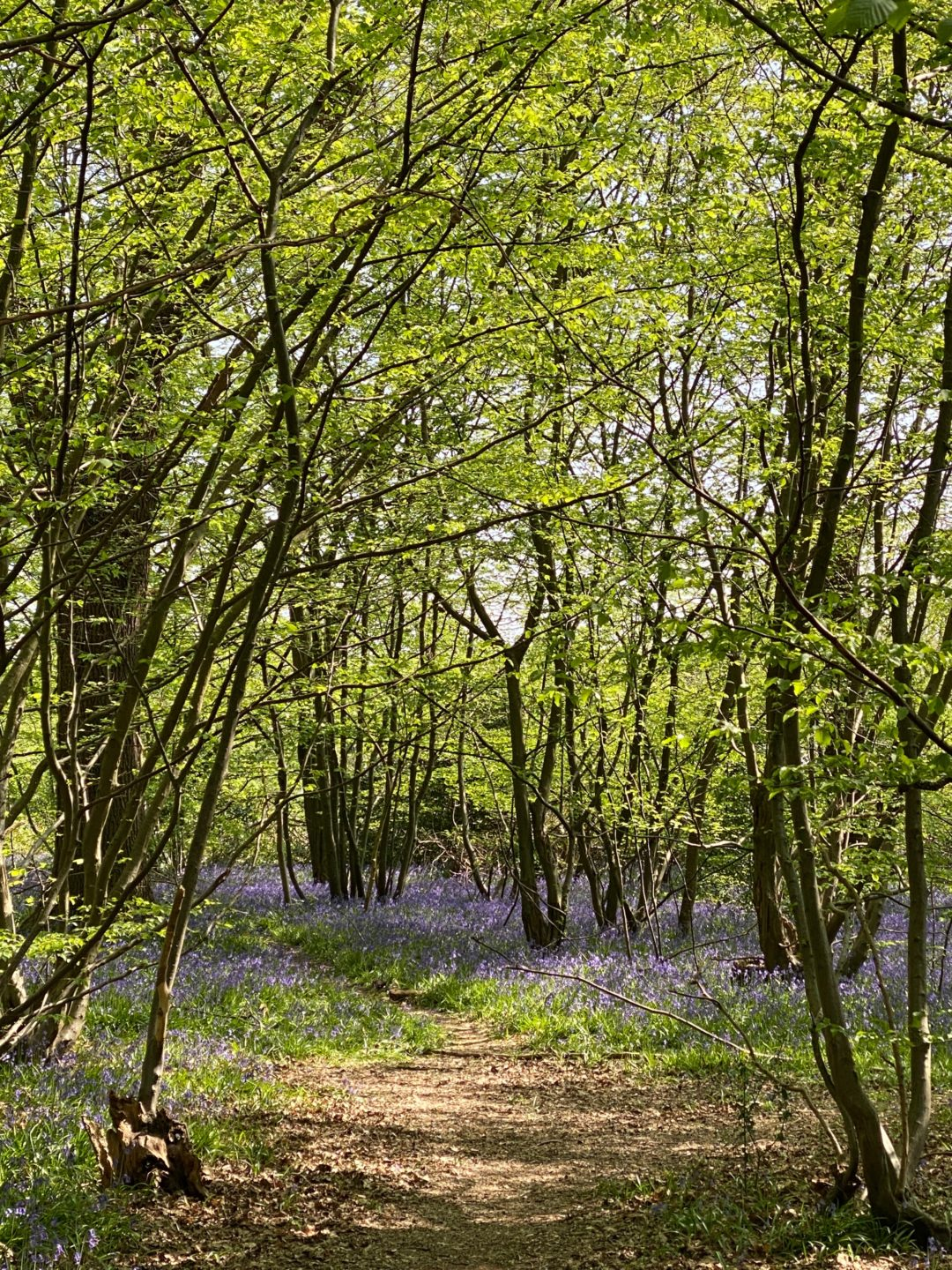 The best place to see bluebells in West London