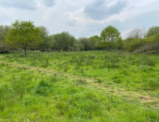 exploring Ickenham Marsh