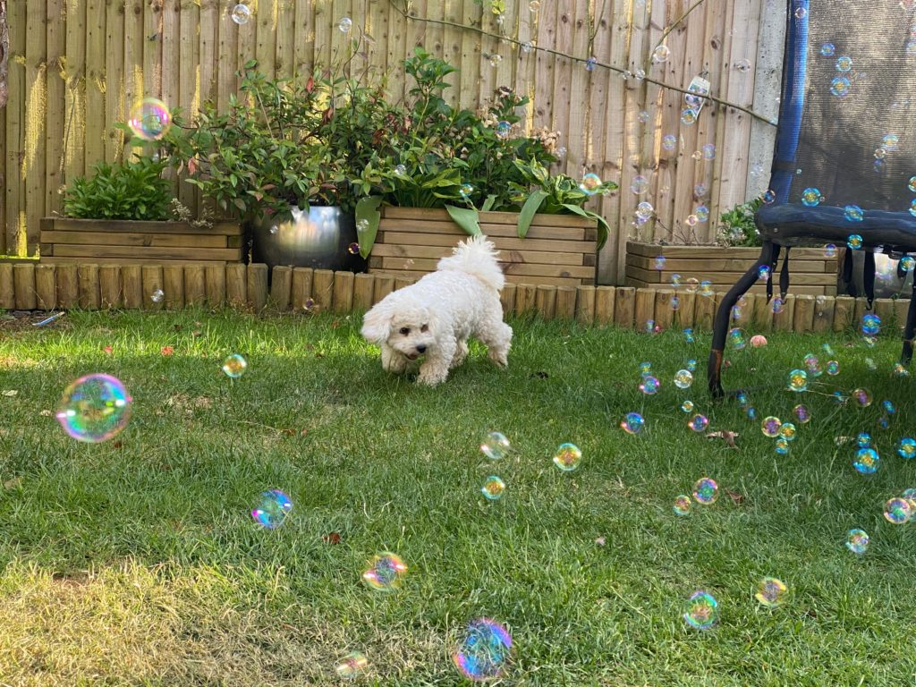 puppy chasing bubbles