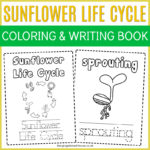Free Sunflower Life Cycle Colouring and Writing Book