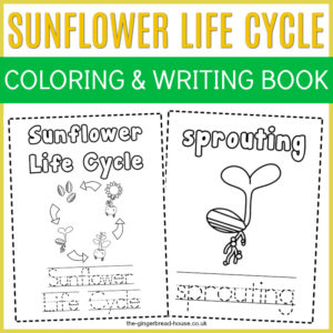 Free Sunflower Life Cycle Colouring and Writing Book from the gingerbread house blog