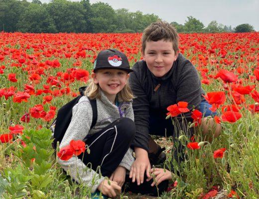 poppy fields near Welwyn, Hertfordshire