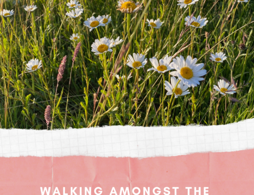 Walking amongst the moon daisies in West London