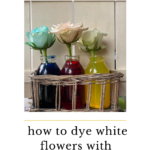 How to dye white flowers with food colouring