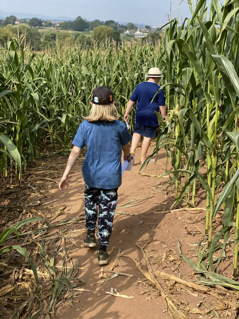 Exploring the Maize Maze