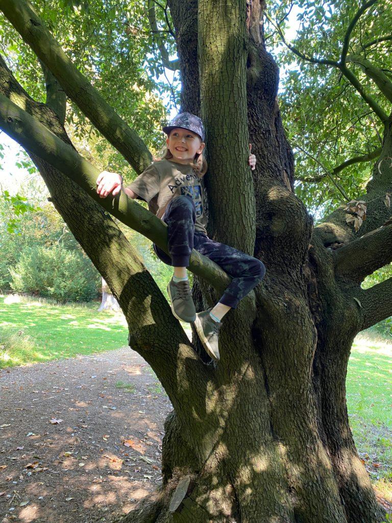 climbing trees at Hughenden