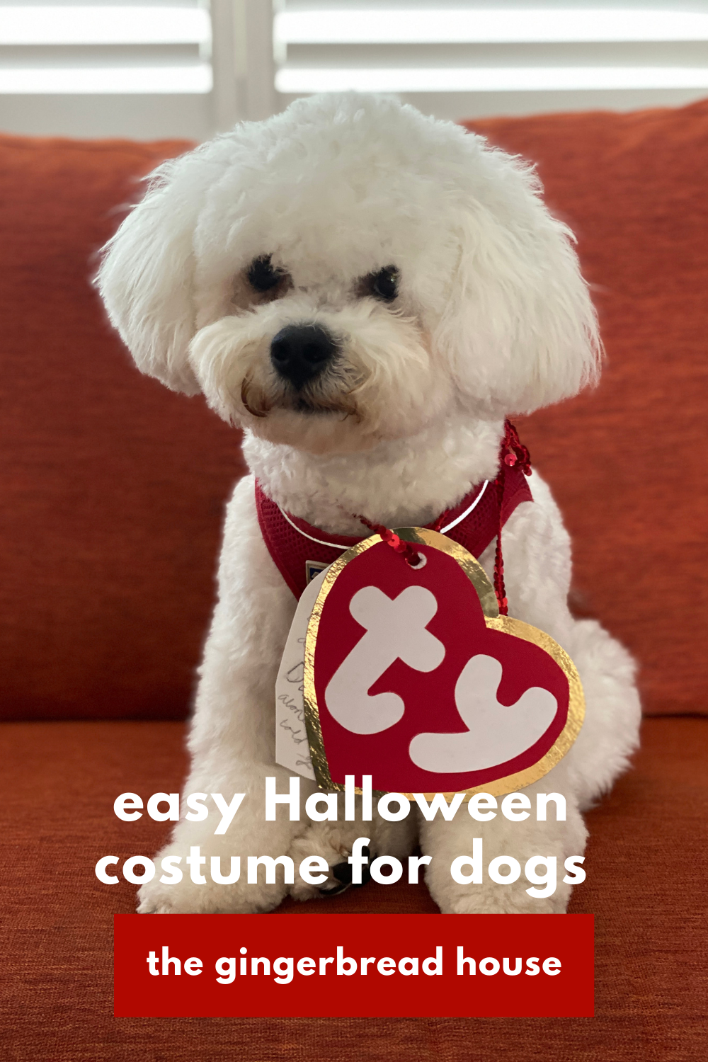 Easy Halloween costume for dogs