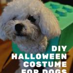 DIY lego brick Halloween costume for dogs