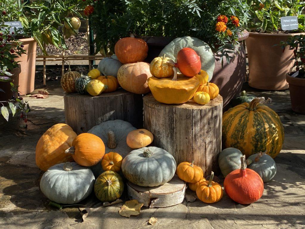 pumpkin display at RHS Wisley