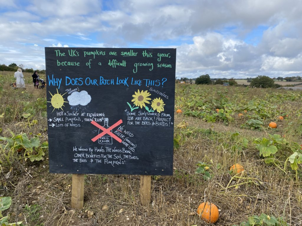 The Pop Up Farms' Pumpkin Patch