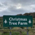 A visit to the Christmas Tree Farm Chesham