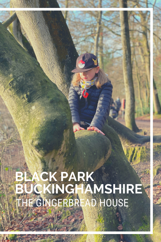 A walk through Black Park Country Park, Bucks