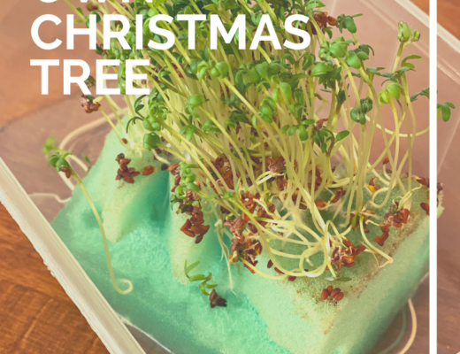 Grow your own Christmas tree sponge