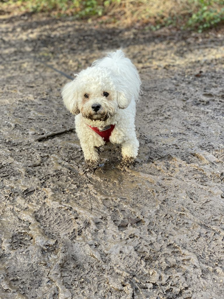 dog walking at Black Park, Bucks