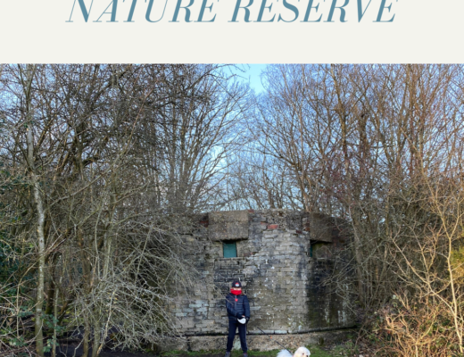 Exploring Bentley Priory Nature Reserve
