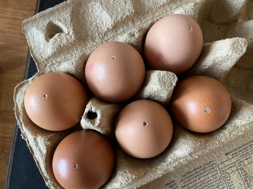 dye eggs for Easter