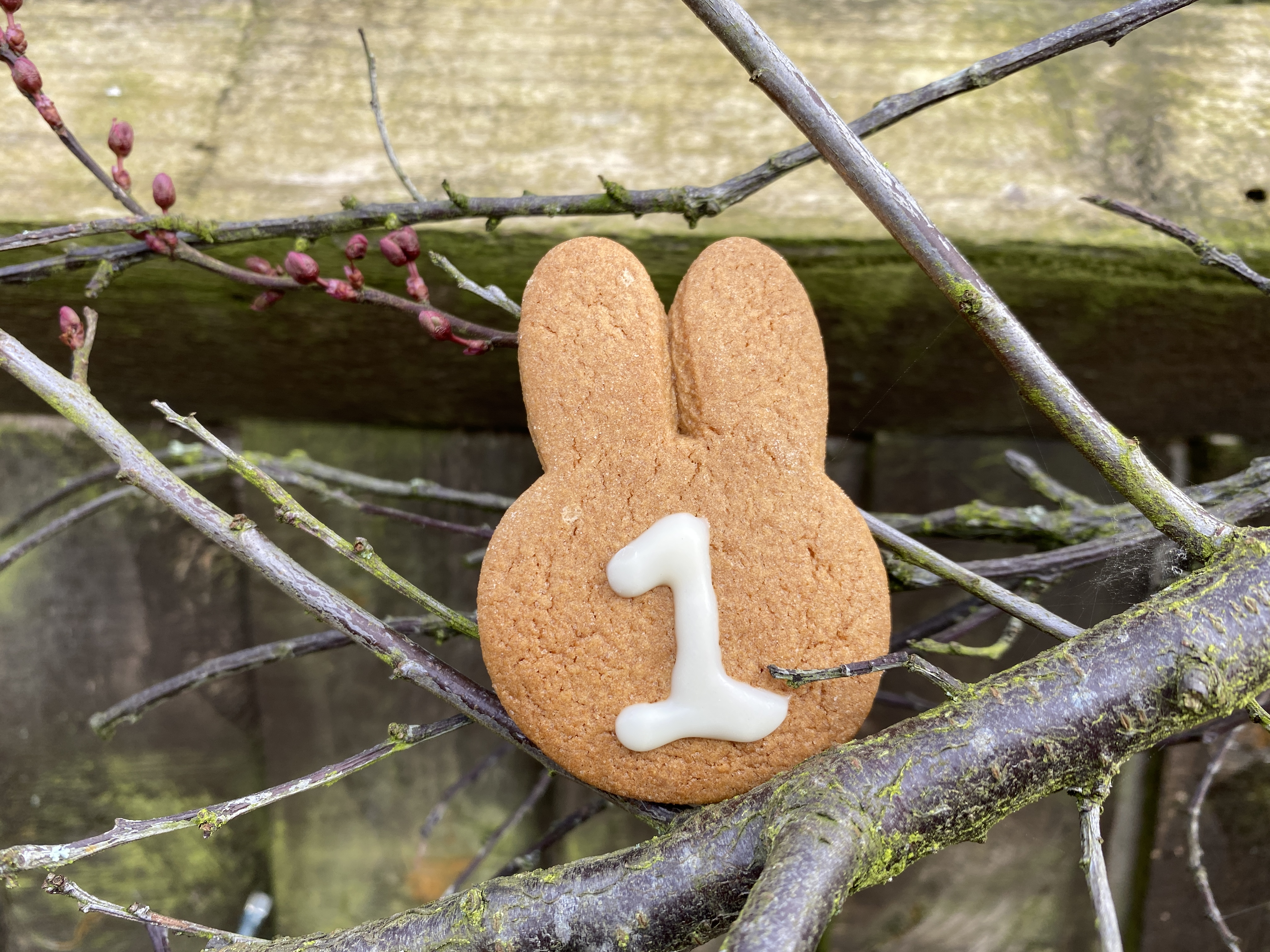 gingerbread bunny biscuits