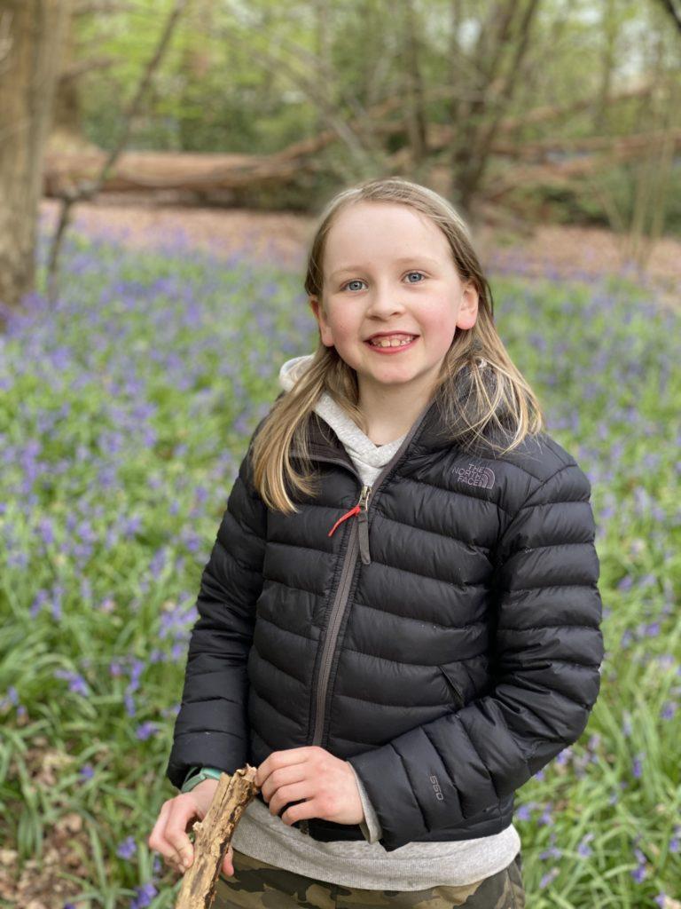 bluebells in Ruislip Woods