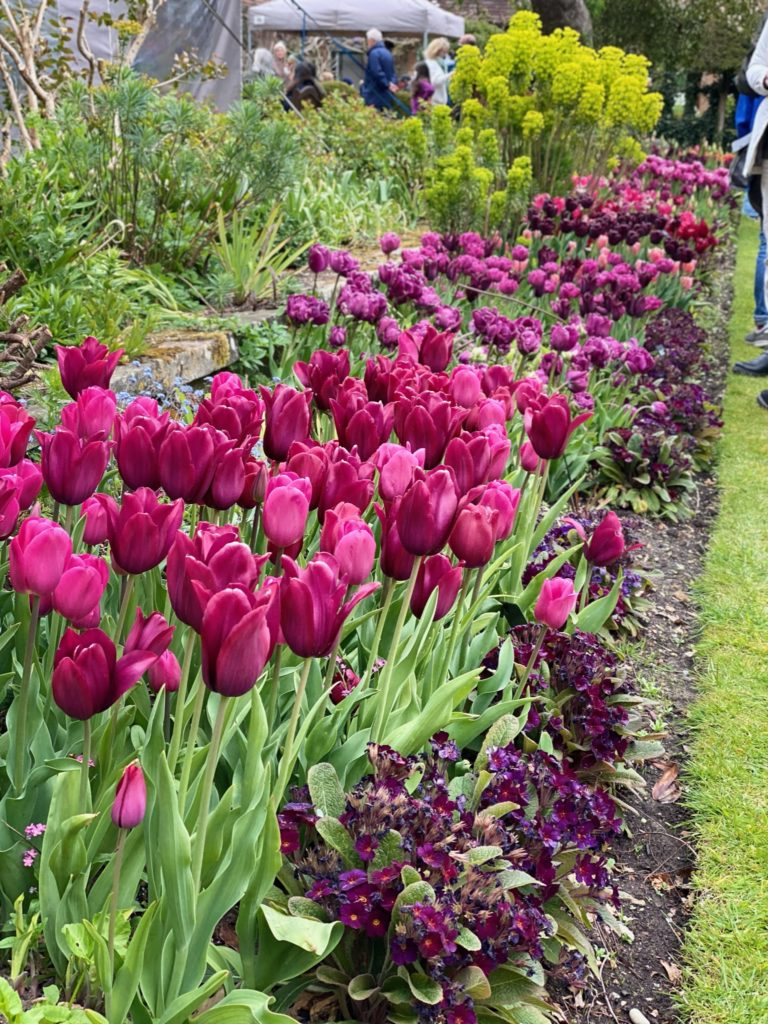 tulips at Chenies