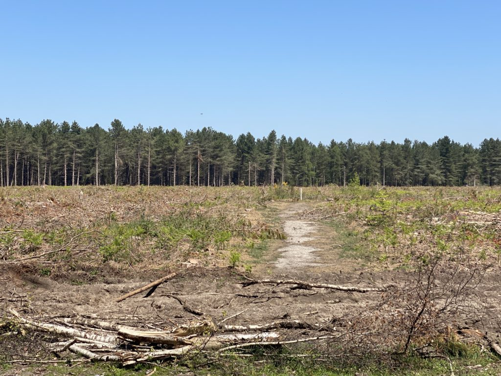 site of 1980 UFOs at Rendlesham Forest