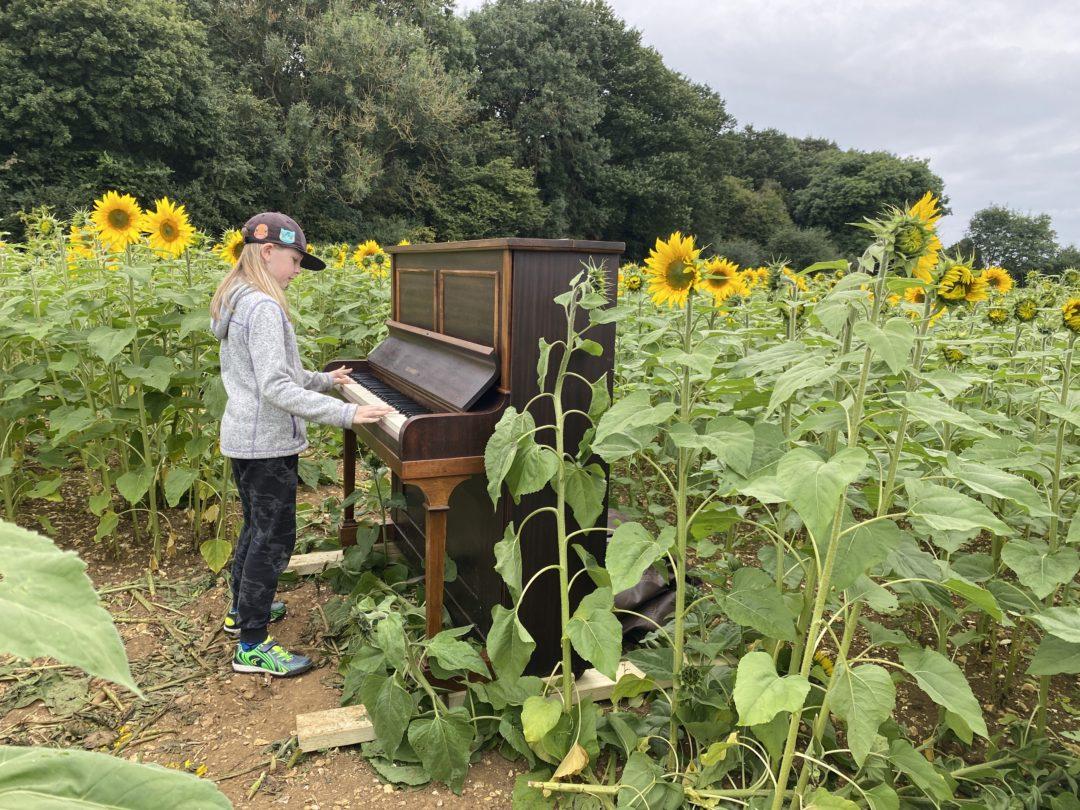 piano in sunflower fields
