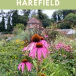 Exploring Church Gardens, Harefield