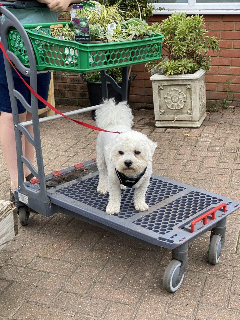 dog at garden centre