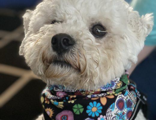 puppy bandana