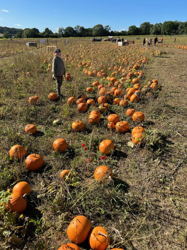 Picking pumpkins at the Pop Up Farm outside London