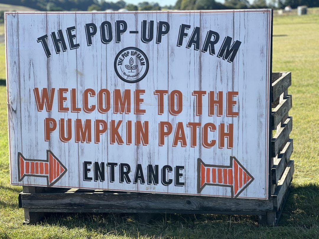 Picking pumpkins at the Pop Up Farm