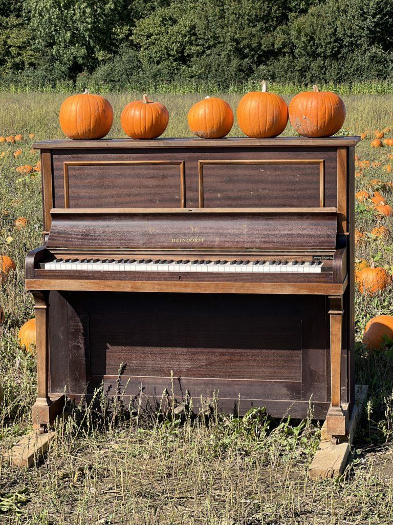 photo props at the pumpkin farm